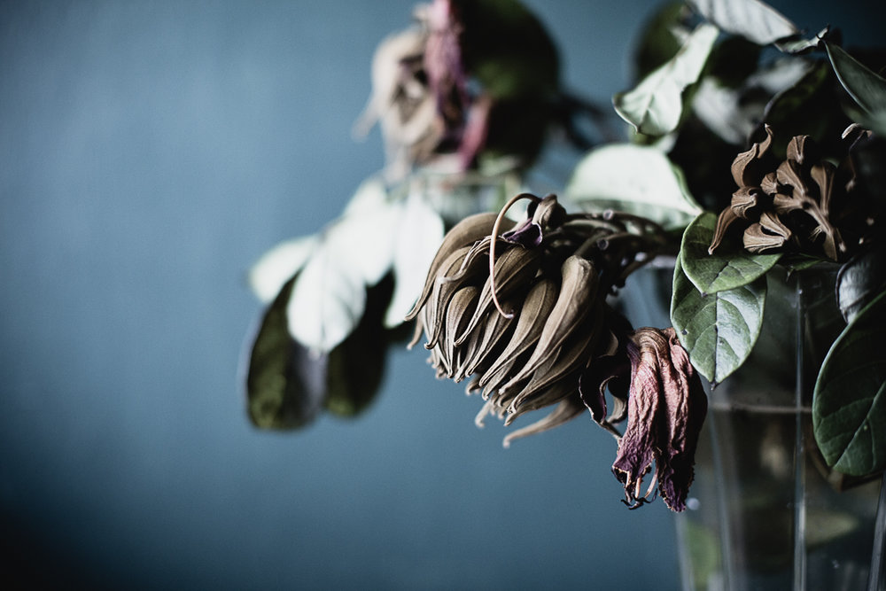 Flowers Decay-6.jpg