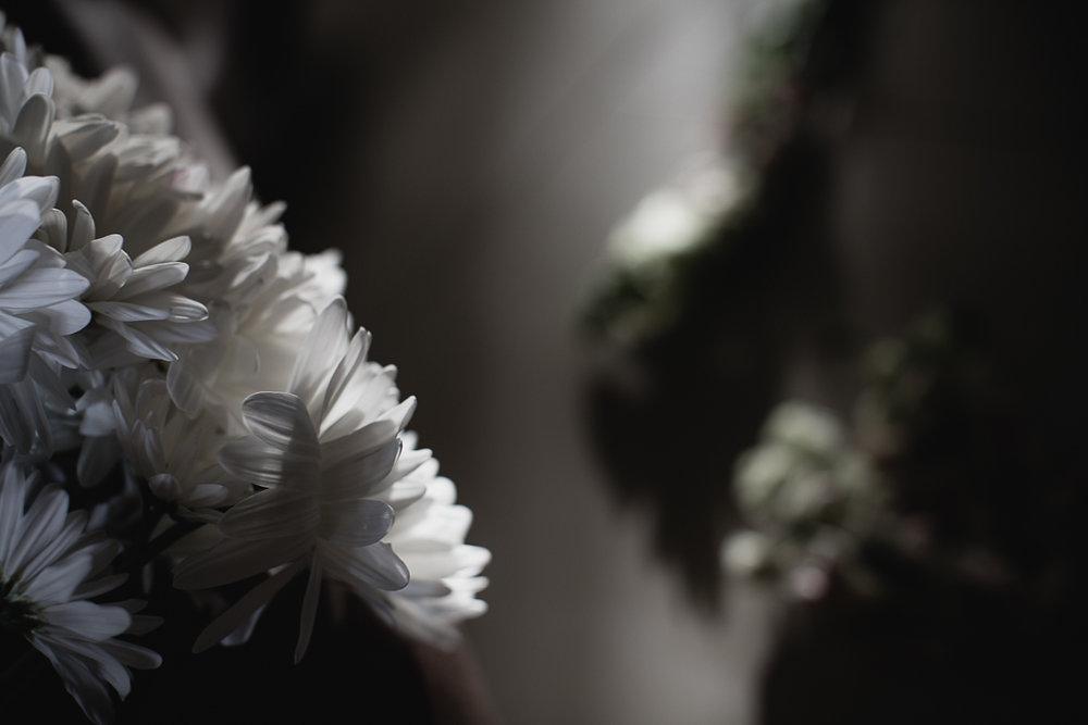 Flowers Daisy-4.jpg