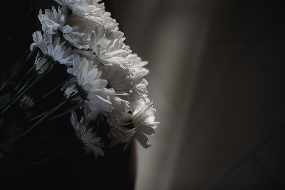 Flowers Daisy-6.jpg