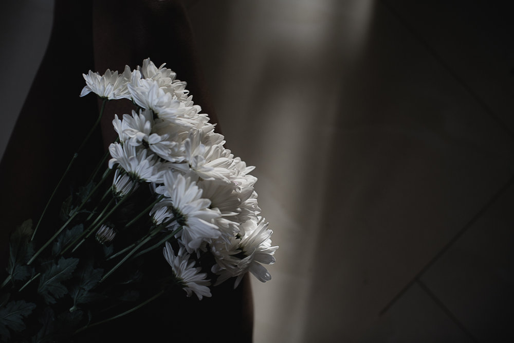 Flowers Daisy-5.jpg