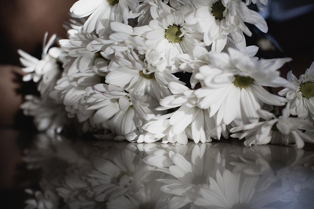 Flowers Daisy-7.jpg
