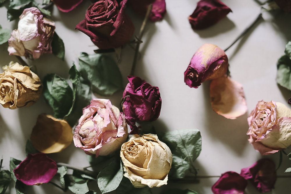 The dried roses-6.jpg