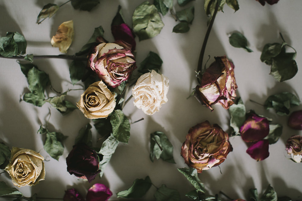 The dried roses-4.jpg