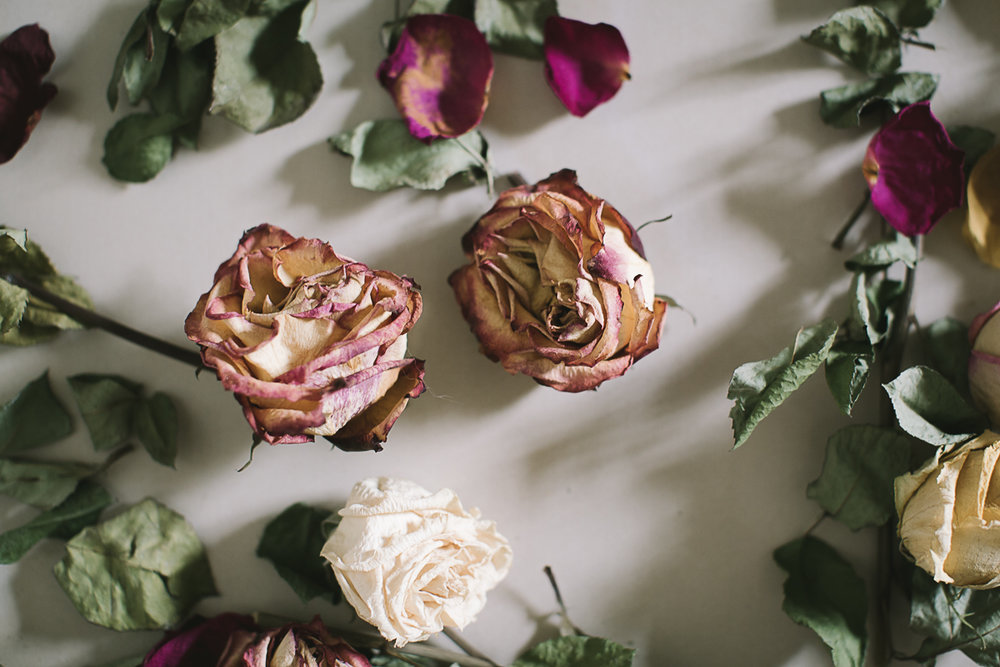 The dried roses-3.jpg
