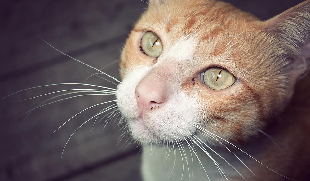 Cat-LUT-post.jpg