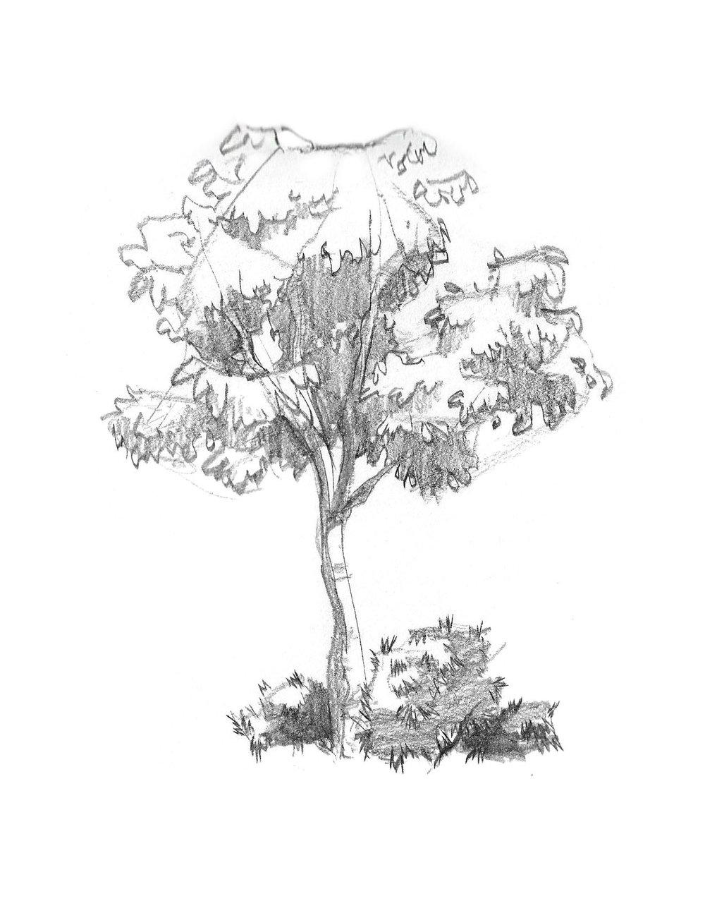 2018-09_Tree 01.jpg