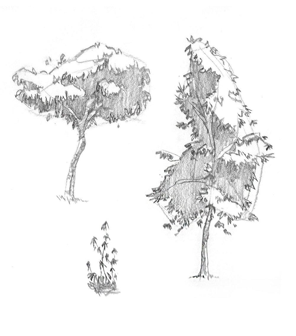 2018-09_Tree 03.jpg