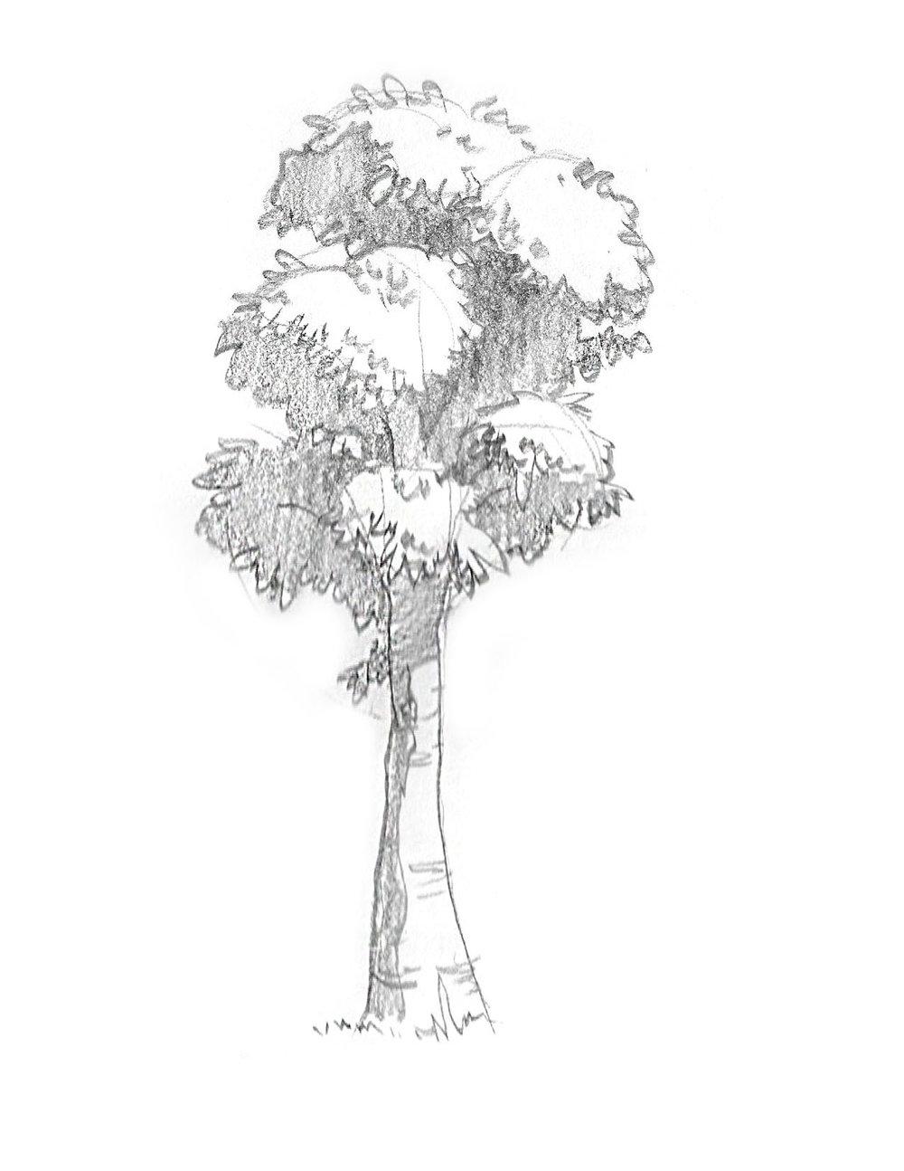 2018-09_Tree 06.jpg