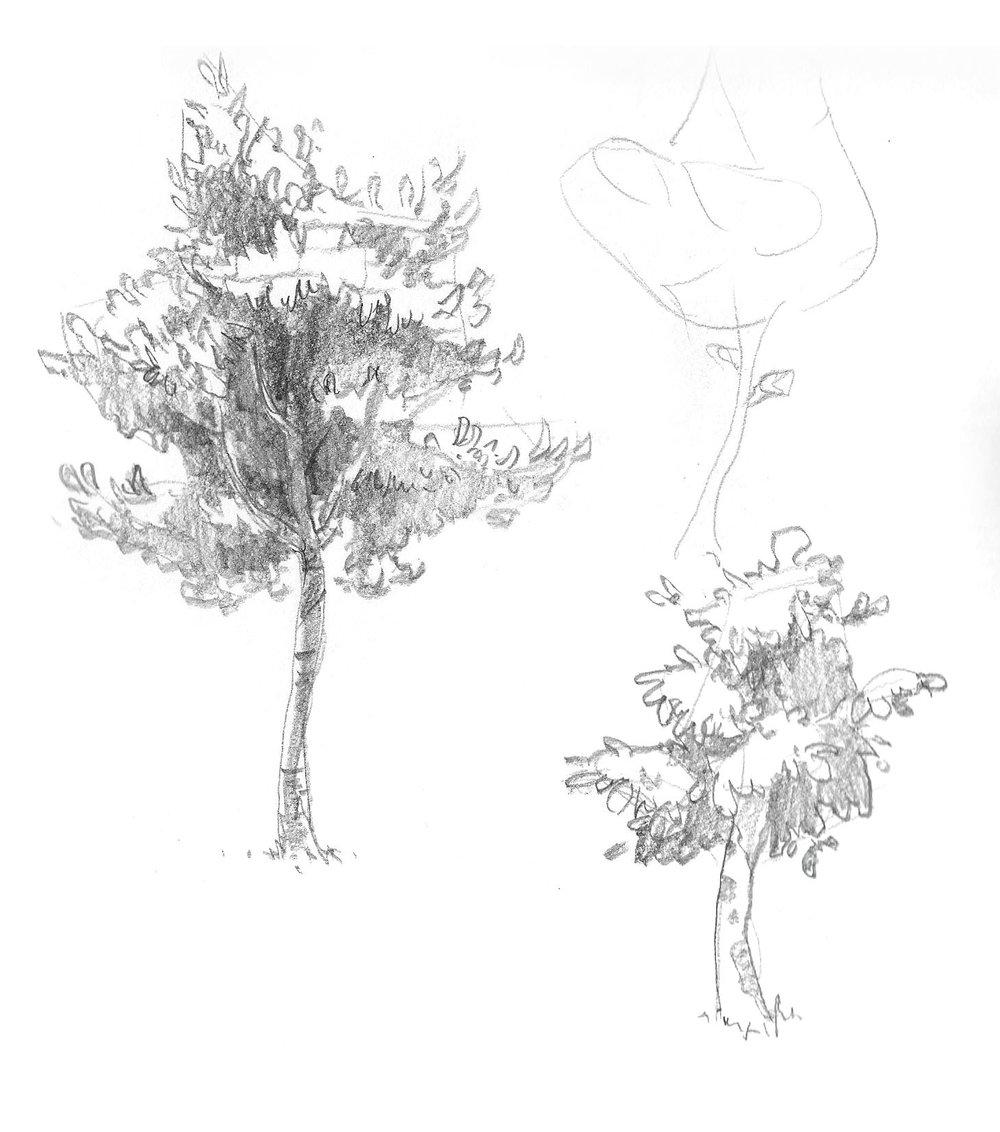 2018-09_Tree 05.jpg