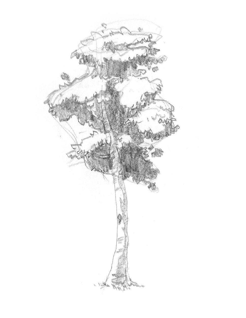 2018-09_Tree 04.jpg