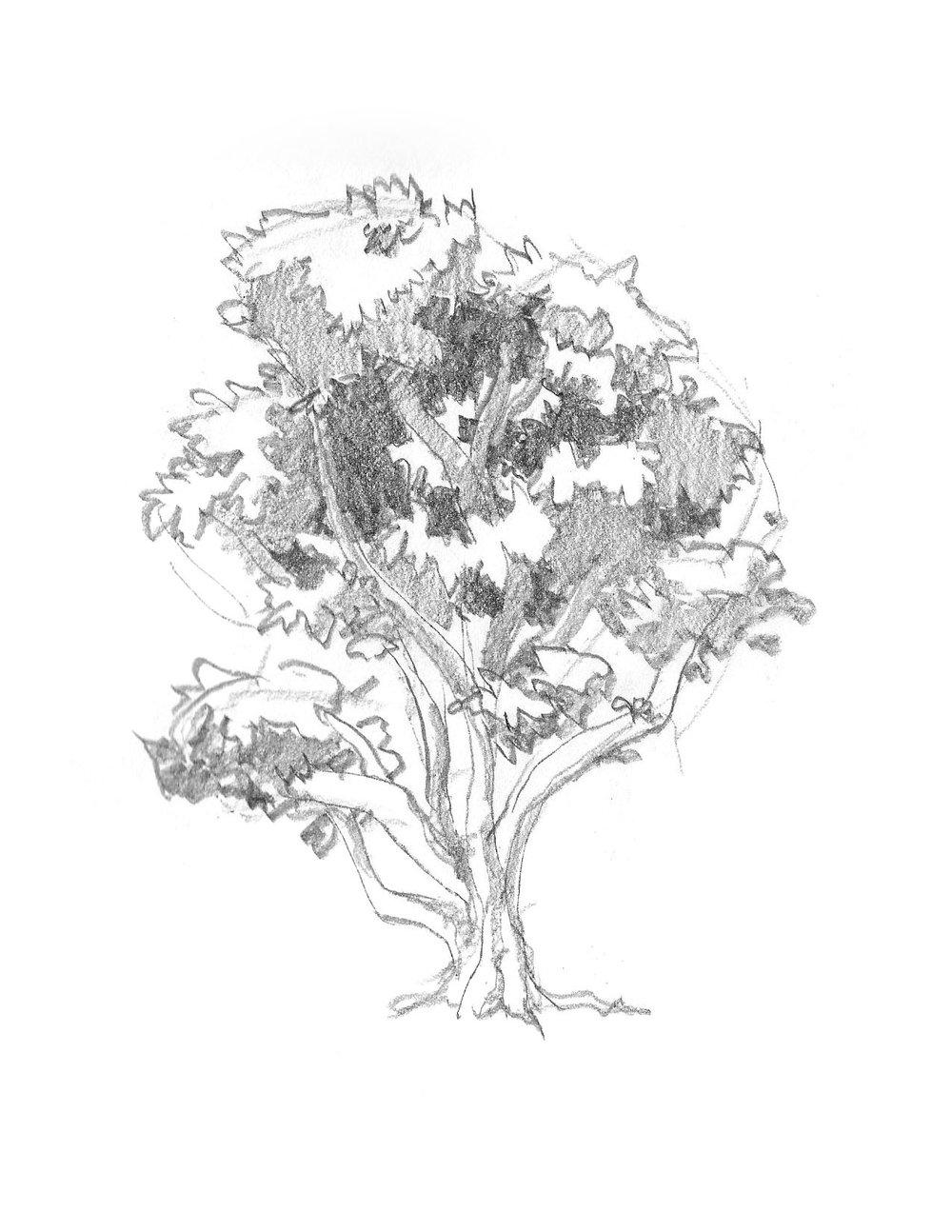 2018-09_Tree 07.jpg