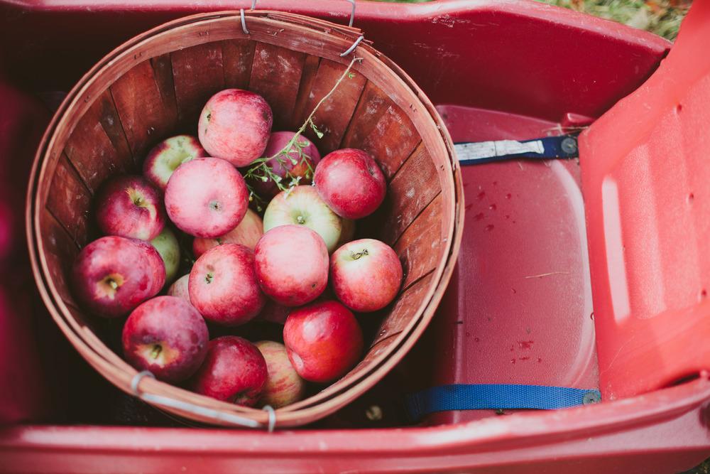 Apples-24.jpg