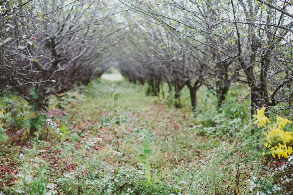 Apples-45.jpg