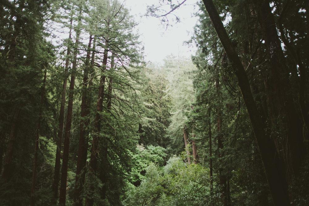 SanFranTrees-7.jpg