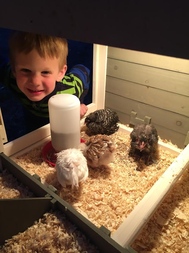 Kai with a few of his new chickens.