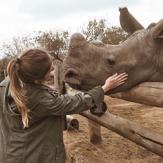 #Worldrhinoday Esse é um dos 5 rinocerontes bebês órfãos que tem no hesc e em troca do chifre perderam suas mães. Hoje vivem no hesc onde são super bem cuidados. Ter estado tão pertinho deles e ter tido a oportunidade de cuidar-los foi sensacional mas preferiria mil vezes que eles pudessem estar livre com suas mães.  Por um mundo sem comercialização de chifres de rinocerontes ♥️🦏