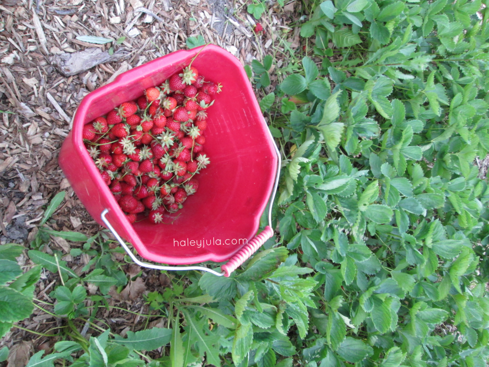 Buckets of berries!