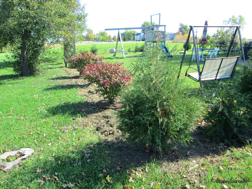 Burning Bushes and American Arborvitae