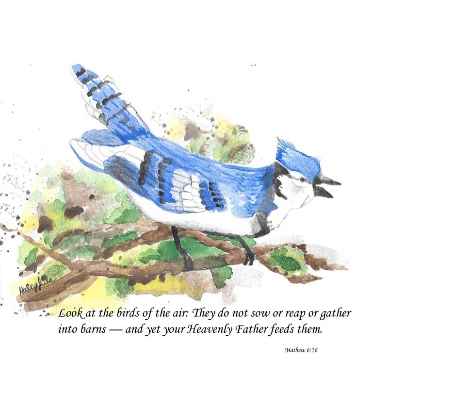 Blue Jay Watercolor Painting ©Haley Jula