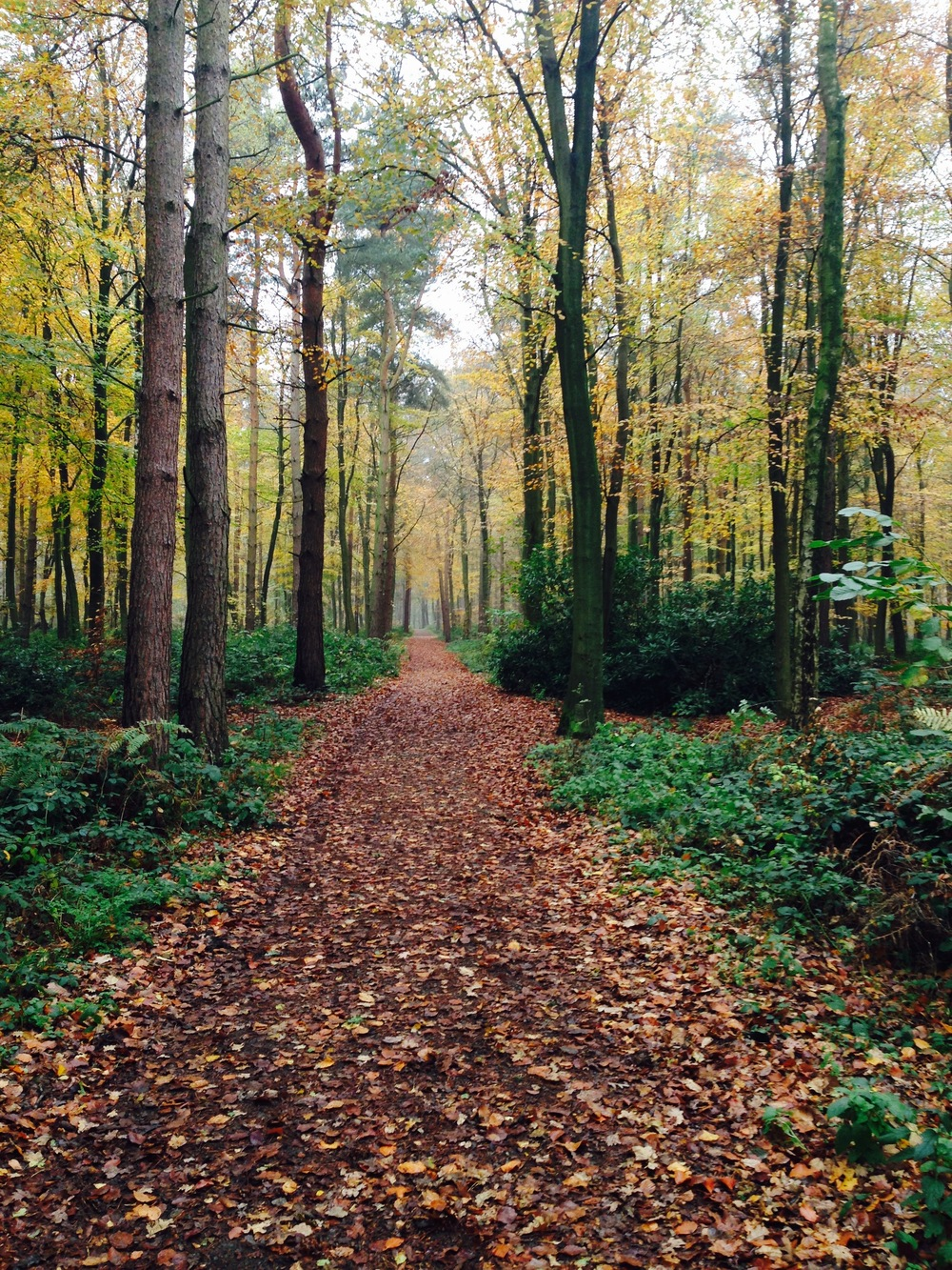 Leicestershire Woods by Melanie Cave