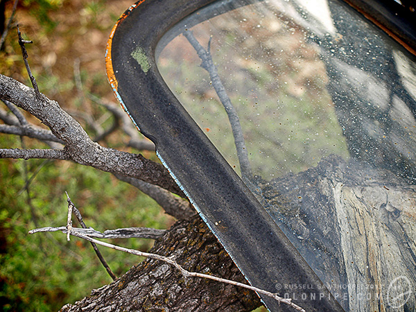 This is the front quarter-window from a truck or bus hanging in a tree.