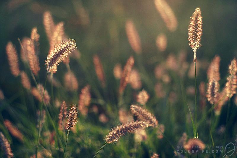 More grasses.