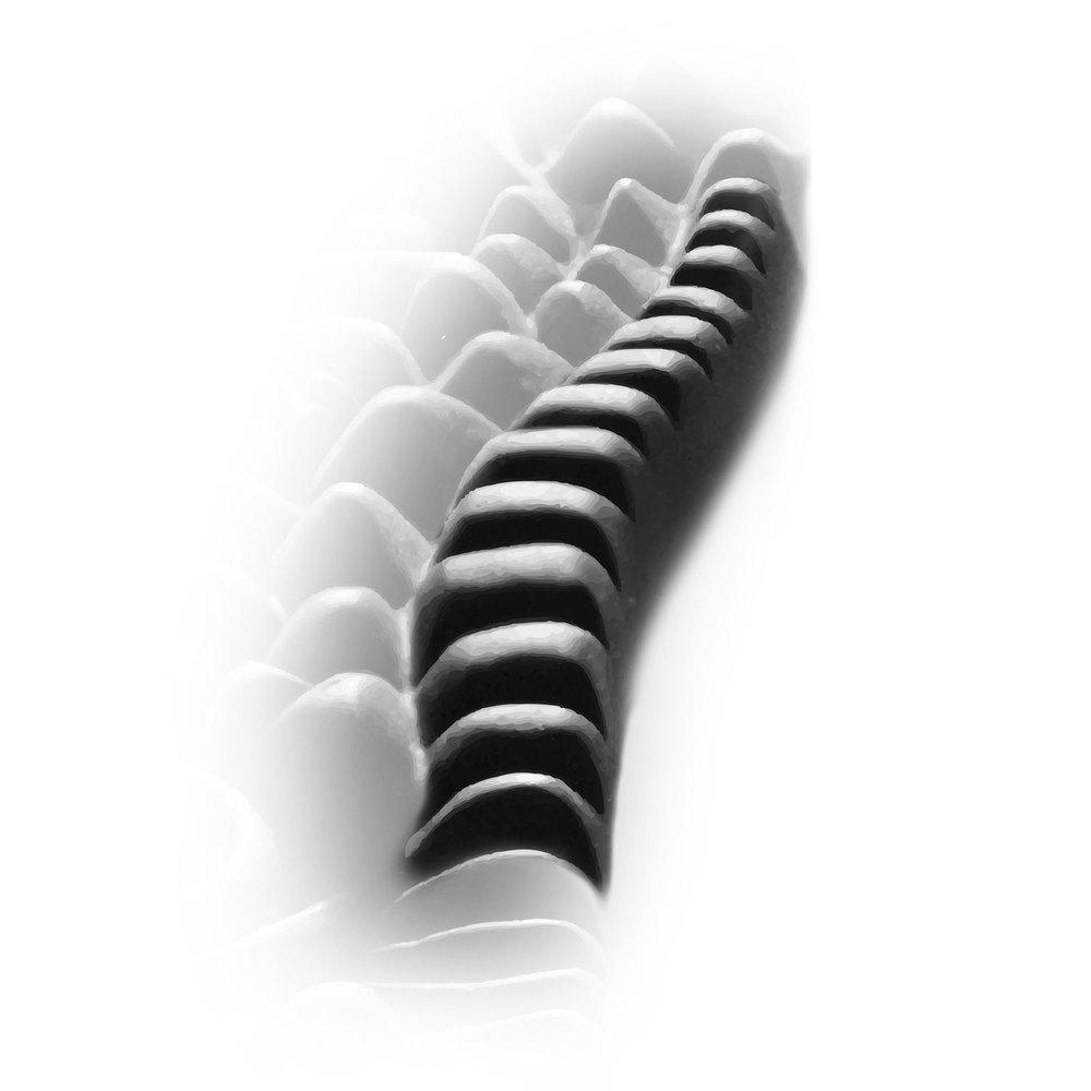 Die   Wirbelsäule   ist mit starken Formen vertreten. So können diese stimulierend die Fußwölbung erreichen. Dadurch wird angestrebt, den   Lenden-Kreuzbereich   und den   Rücken   wieder frei zu machen für den Energiestrom, was besonders auch Nieren, Darm, Leber und Milz zugute kommt.