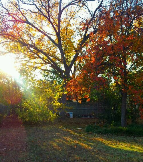 Autumn sunbeam