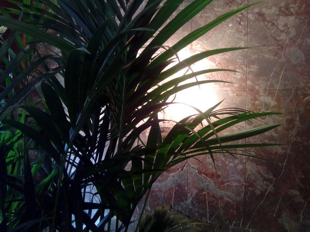 hk 14 plant-light.jpg
