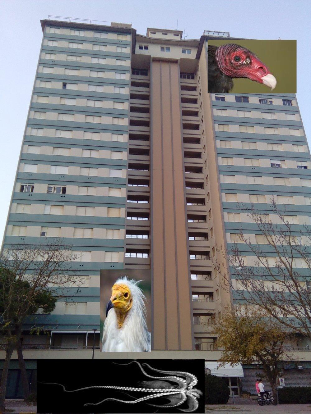 vulture grand hotel.jpg