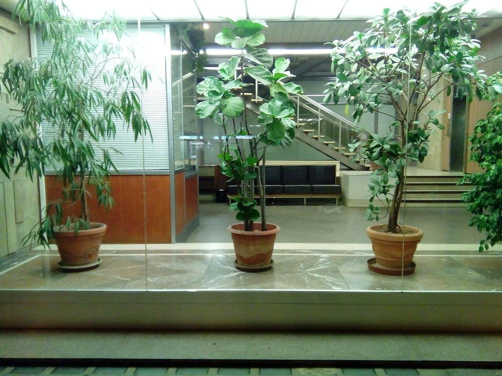 plants day.jpg