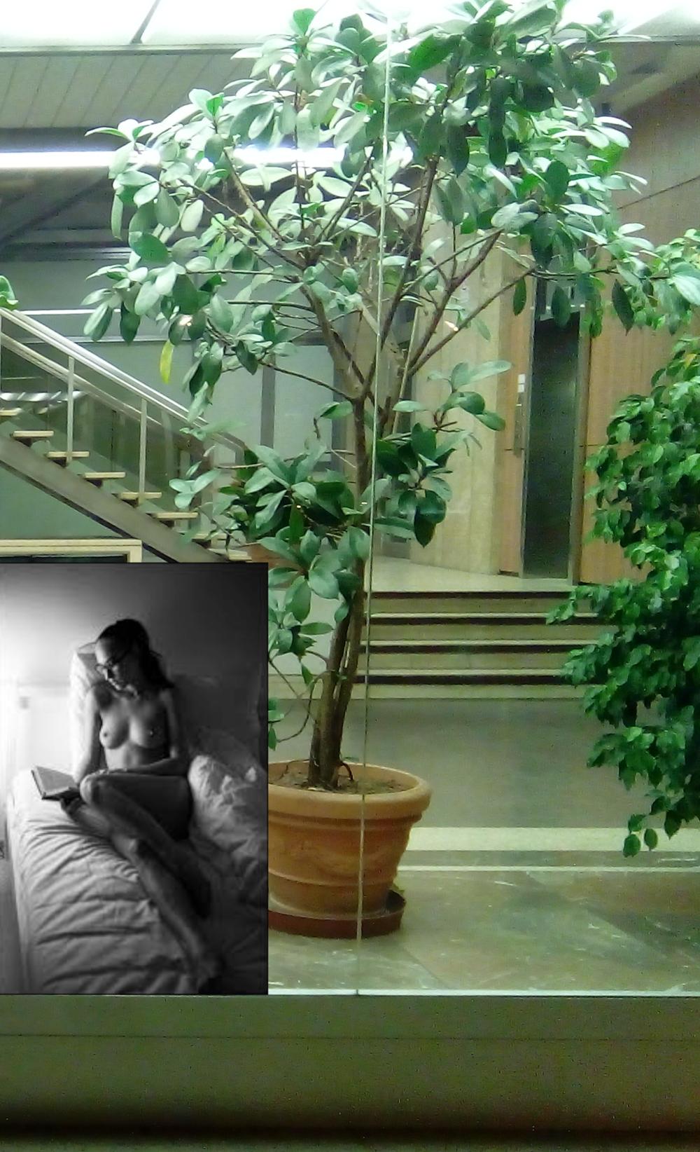 hk 34 reader plant.png