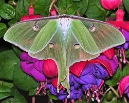 hk 37 moth 3.jpeg