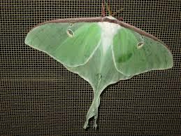 hk 37 moth 1.jpeg