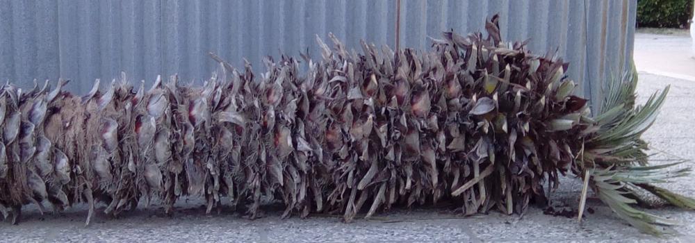 dead palm hk 39.png