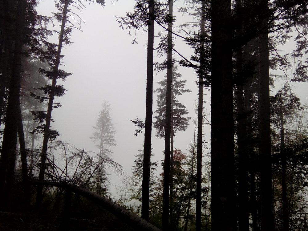 spooky forest.jpg