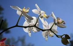 Il morbido jazz vibrafonico e fiori finti leniscono la vecchiaia delle stelle.