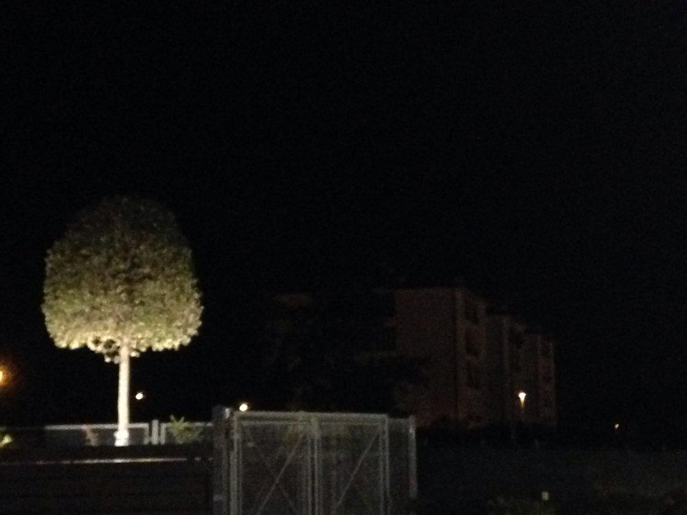 Un albero, chiaramente
