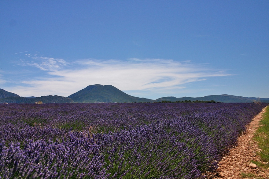 Lavender below, mountains above EAT.PRAY.MOVE Yoga Retreats | Provence, France