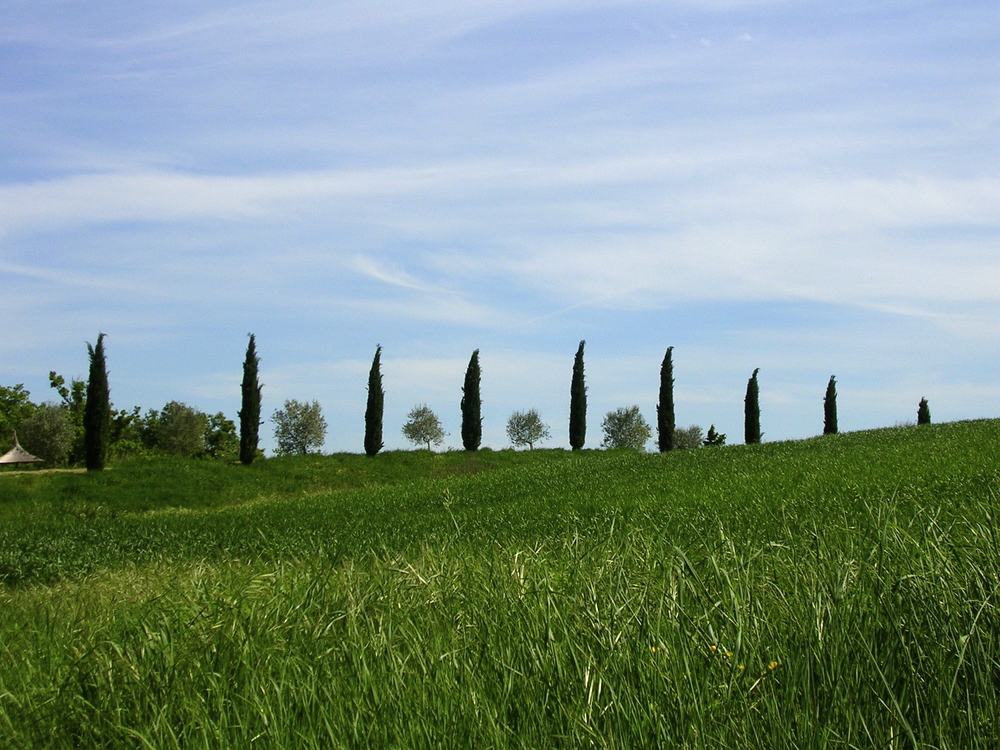 Tuscan cypress trees EAT.PRAY.MOVE Yoga Retreats | Tuscany, Italy