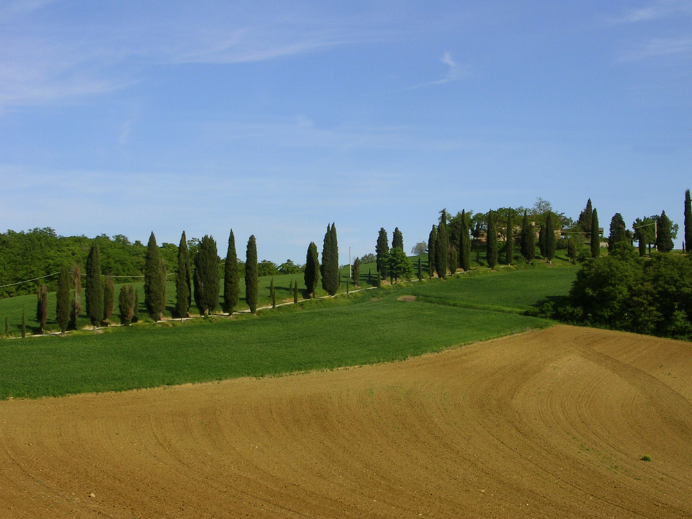 Rolling hills of cypress Siliano Alto EAT.PRAY.MOVE Yoga Retreats | Tuscany, Italy