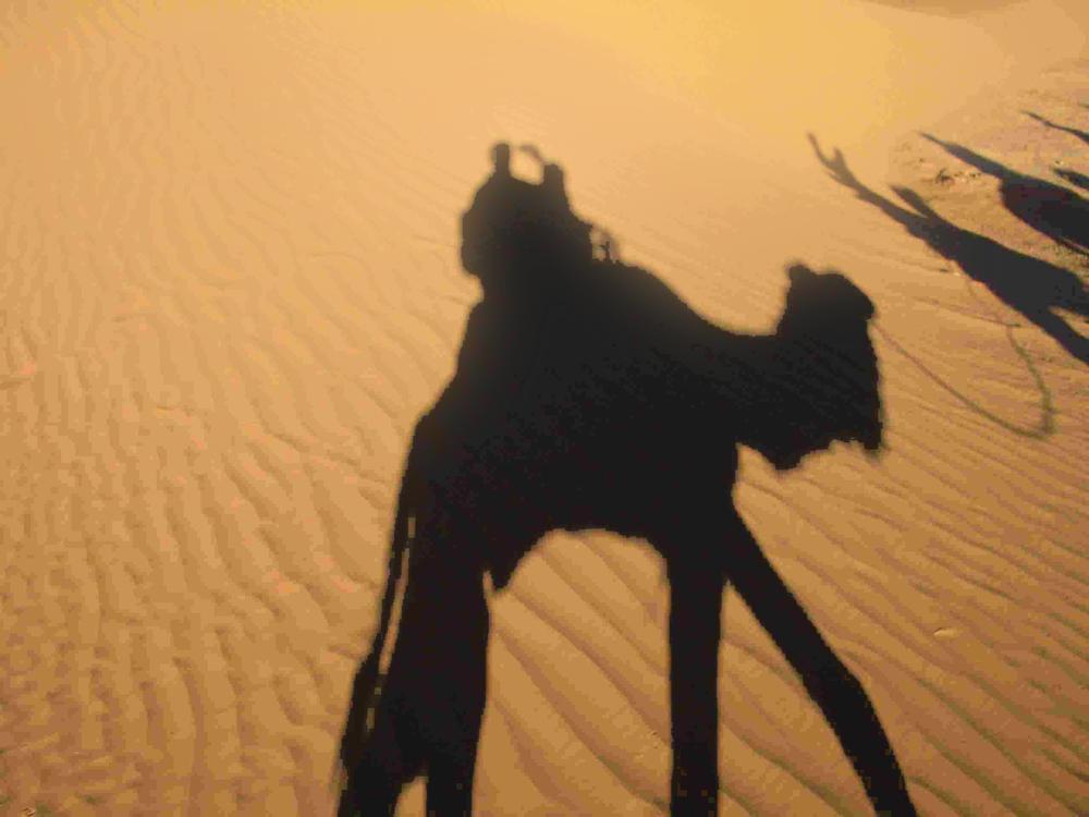 Camel1.jpg