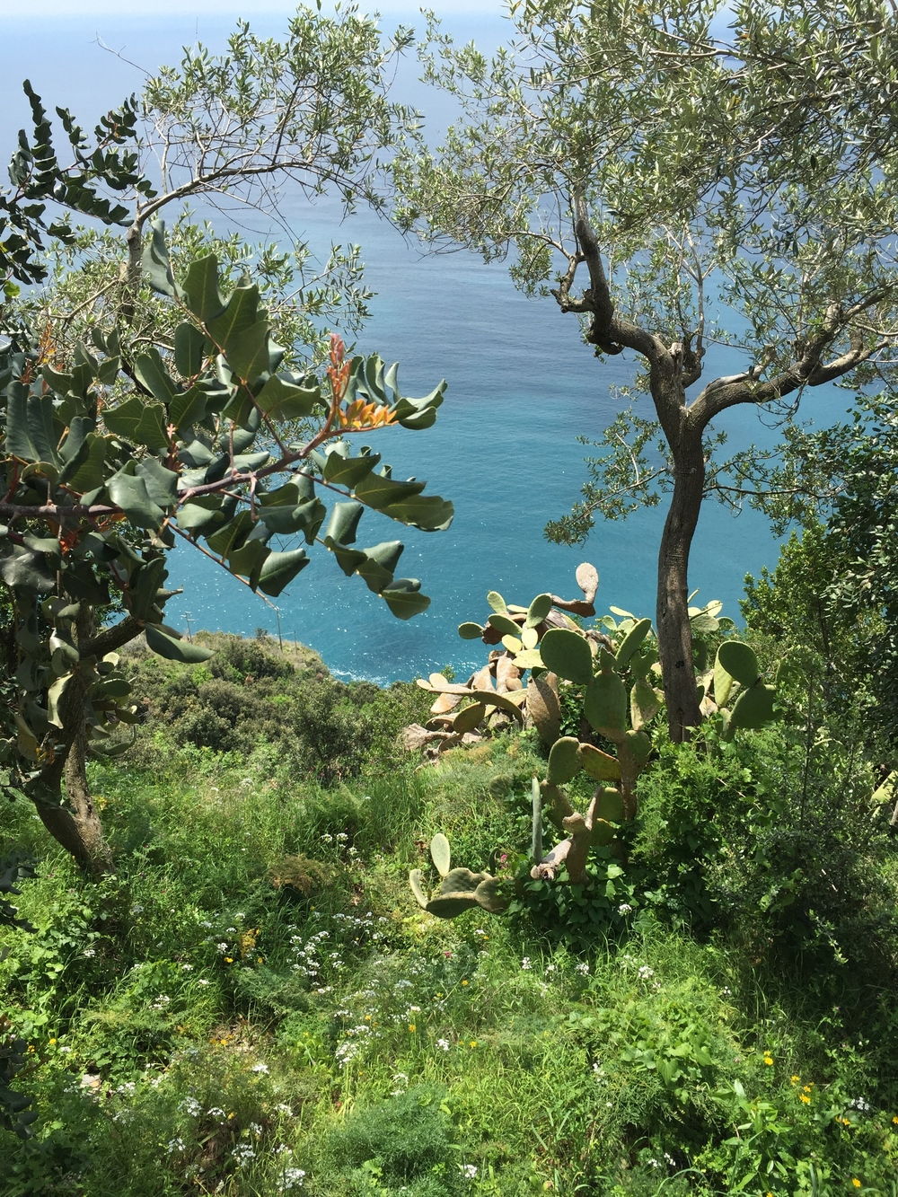 The ocean through the trees EAT.PRAY.MOVE Yoga Retreats | Amalfi Coast, Italy