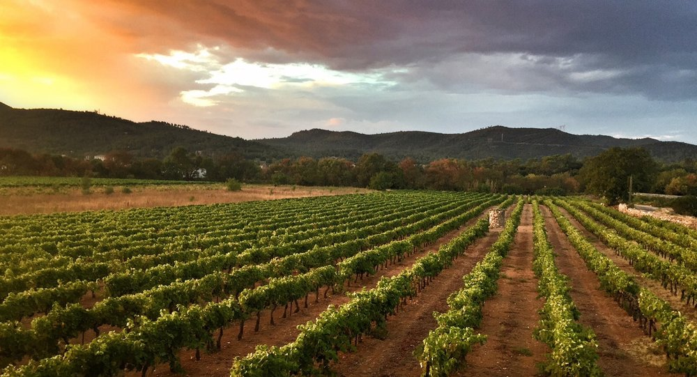 Vineyards nearby Bastide Avellanne | EAT.PRAY.MOVE Yoga Retreats | Provence, France