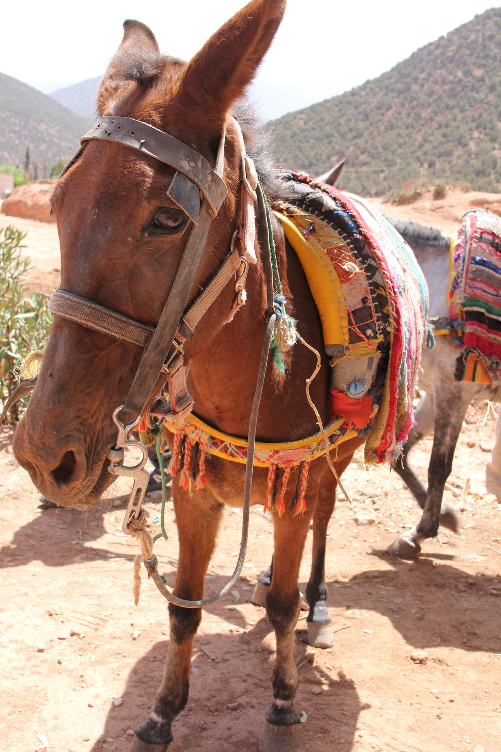 Mule Trek Kasbah Tamadot Atlas Mountains  | EAT.PRAY.MOVE Yoga Retreat |  Morocco