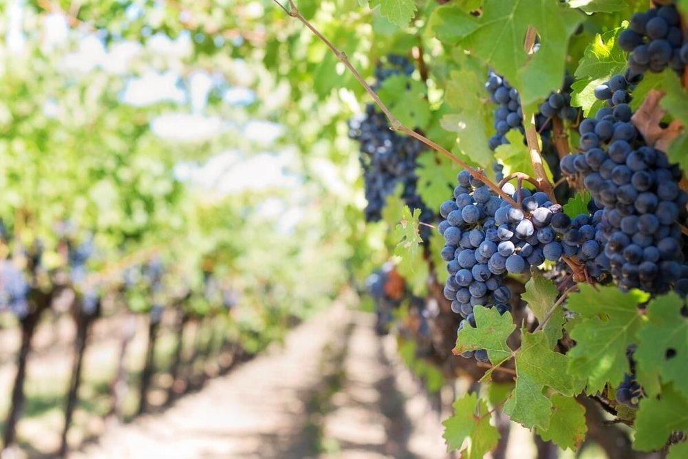 Vineyards of Chianti Castello del Nero | EAT.PRAY.MOVE Yoga | Chianti, Italy