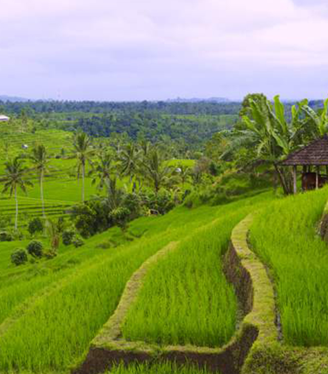 Rice paddies from above EAT.PRAY.MOVE Yoga Retreats | Bali, Indonesia