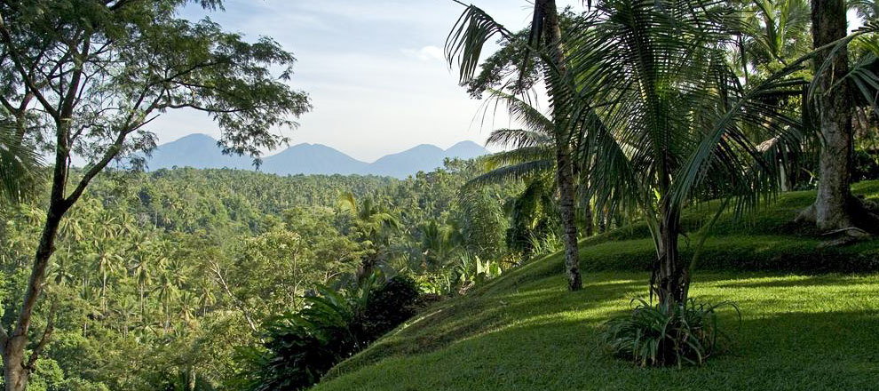 The view from the hotel Alila Ubud EAT.PRAY.MOVE Yoga Retreats | Bali, Indonesia