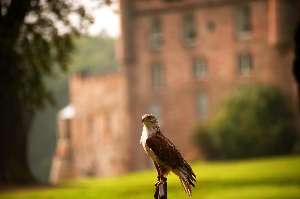 Famed falcons Dalhousie Castle | EAT.PRAY.MOVE Yoga | Edinburgh, Scotland