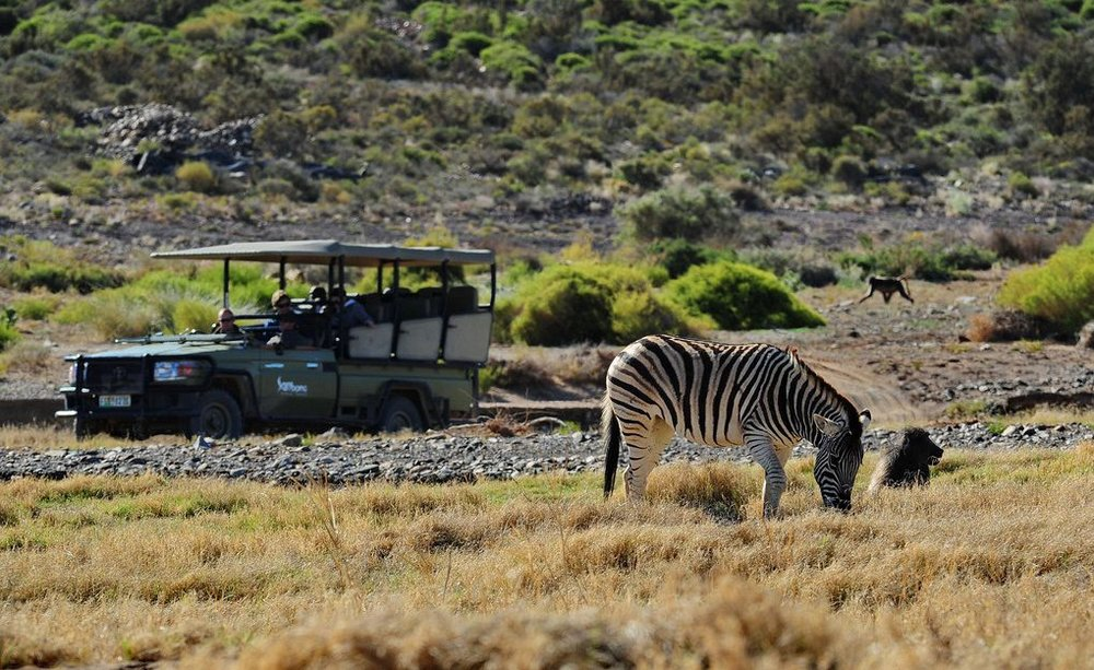 gallery-34-302-sanbona-game-drive-guest-experience-1-min.jpg